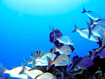 School of tropical fishes. Somewhere in the caribbean stock images