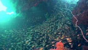 School van glasvissen in onderwaterhol Rode overzees stock footage