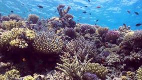 School van kleurrijke vissen op achtergrond van koraalriflandschap onderwater stock footage