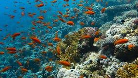 School van tropische vissen stock videobeelden