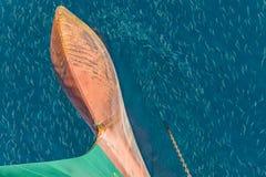 School van vissen Royalty-vrije Stock Afbeelding