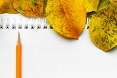 School notebooks, pencil and autumn leaves. Back to school concept. Creative flat lay. School white notebooks, pencil for left handed and autumn yellow leaves stock images