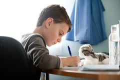 Schoolboy doing homework at his stock images