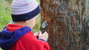 Schoolboy in the Park studies of plants and nasekomye through a magnifying glass. Study of the outside world, pre-school royalty free stock images