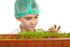 Schoolboy som kontrollerar nya växter i laboratorium Royaltyfria Foton