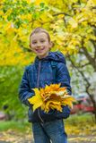 Schoolboy with yellow maple leaves Royalty Free Stock Photos