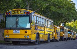 Schoolbussen in de schaduw worden opgesteld die royalty-vrije stock foto