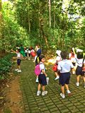 Schoolchildren - nature outing. Primary school pupils being led by their teachers on a field trip at Bukit Batok nature park, Singapore (Photo taken on 28 April Royalty Free Stock Images