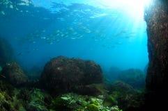 Schoolfish en zon Stock Foto's