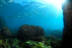 Schoolfish and sun. Underwater scene and background, with plenty fish and light Stock Photos