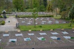 Schoolgardens在荷兰 库存照片