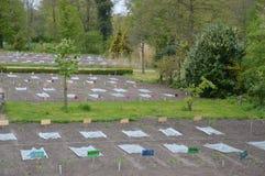 Schoolgardens在荷兰 库存图片