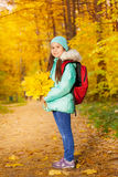 Schoolgirl with bunch of yellow maple leaves Royalty Free Stock Images