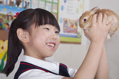 Schoolgirl holding pet rabbit in classroom Stock Photography