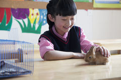 Schoolgirl petting pet rabbit in classroom Stock Photo