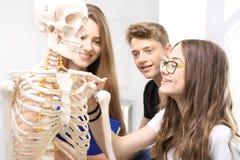 Schoolgirl watching model of a human skeleton. Stock Photos