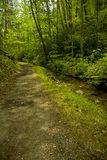 Schoolhouse Gap Trail, Spring. Great Smoky Mountains National Park, TN, USA royalty free stock photography