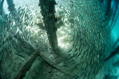 Schooling Fish Below Pier Royalty Free Stock Photos