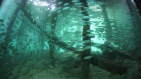 Schooling Fish Below Pier stock footage