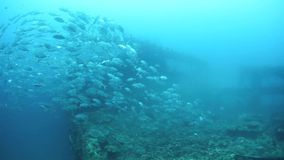 Schooling Fish Over Shipwreck stock video footage