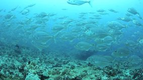Schooling Fish Over Shipwreck stock footage