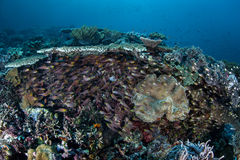 Schooling Fish Under Corals Stock Images