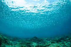 Schooling fishes in Gili, Lombok, Nusa Tenggara Barat, Indonesia underwater photo Stock Photos