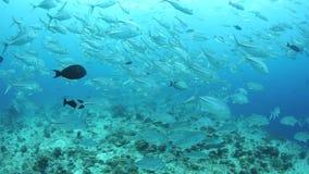 Schooling Jacks Over Reef Stock Photos