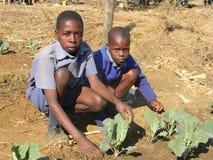Schooljongens die in tuin op school werken Stock Fotografie