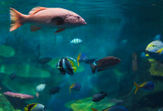 Schools of fish Stock Photography