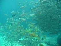 Schools of fish. In gian aquarium Royalty Free Stock Photos