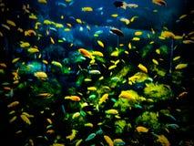 Schools of fish. Toronto zoo marine life Royalty Free Stock Image