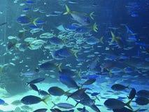 SCHOOLS OF FISH AT SEA PARADISE IN YOKAHOMA, JAPAN stock images