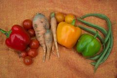 Schooltuin veggies stock afbeelding