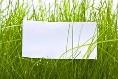 Schoon blad in groen gras Royalty-vrije Stock Foto
