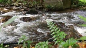 Schoon zoet water van een rivier van de forestSmallberg Water in bergen Rivier in bos in de winter Nationaal Park Tiener Tok Roya stock video