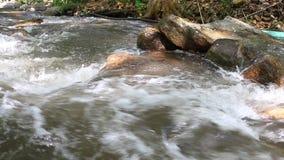 Schoon zoet water van een rivier van de forestSmallberg Water in bergen Rivier in bos in de winter Nationaal Park Tiener Tok Roya stock videobeelden