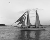 Schooner in black and white Stock Image