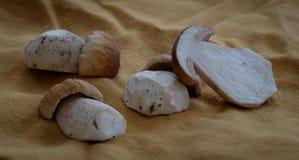 Schoongemaakte boleetpaddestoelen stock foto