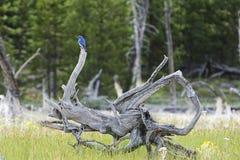 Schoonheid in de wildernis Royalty-vrije Stock Foto