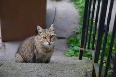 Schoonheid door de ogen van de dakloze katten van New York Stock Foto's