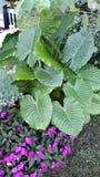 Schoonheid en aardbloemen Stock Foto's