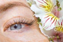 Schoonheid en manierconcept - de Procedures van de Wimperuitbreiding het meisje met blauwe ogen snakt kunstmatige Wimpers en witt stock foto's