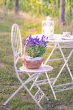 Schoonheid en verse lavendel in de bloempot Royalty-vrije Stock Afbeelding
