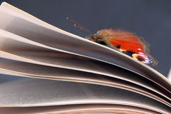 Schoonheid in Kennis - Vlinder op een Boek Stock Foto