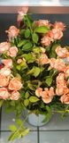 Schoonheid in Kleuren stock foto's