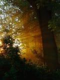 Schoonheid-licht stock afbeeldingen