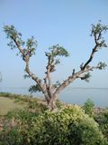 schoonheid van aard een mooie boom Stock Afbeelding