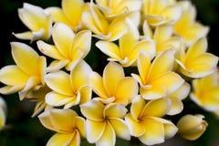 schoonheid van bloem Royalty-vrije Stock Foto