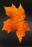 Schoonheid van de herfst Stock Foto